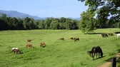 dumanlı : Horses grazing at Cades Cove, Great Smoky Mountains National Park. Camera locked. Stok Video