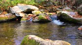 dumanlı : Lazy, bubbling stream at Great Smoky Mountains National Park, Tennessee. Camera locked. Stok Video