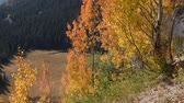 yaprak döken : Aspens changing color along the San Juan Skyway, Uncompahgre National forest, Colorado. Camera locked.