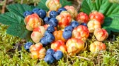 autumn : Wild berries on the moss closeup. Fresh wild fruits Stock Footage