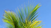 palma : Palm tree leaves in the wind and blue sky