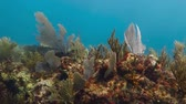 cozumel : Underwater tropical coral reef full of aquatic life