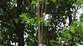 giant panda : One Lovely Giant Panda Bear Cub in the Tree in Chengdu Research Base of Giant Panda Breeding