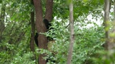 giant panda : lovely panda on tree Stock Footage