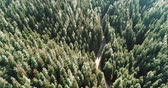 Aerial shot of pine tree forest in the mountain with small road , wild nature landscape 4k aerial footage Videos