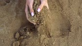pirata : Female hands dig in sand and find gold bitcoin