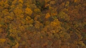 ahornbaum : Aerial view at the beautiful autumn forest Stock Footage