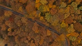 ahornbaum : Aerial view at the road in beautiful autumn forest