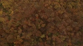 fundo colorido : Aerial view at the beautiful autumn forest Stock Footage
