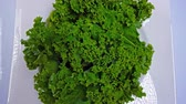 Kale Best Superfood Ever 4K Stock Footage