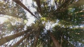 New Cinematic Looking Up Rotating At Forest With Light Beaming Through Trees 4K Stock Footage