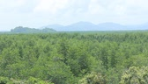 forest : Floor Ranong Mangrove Biosphere Reserve area