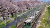 shiroishi : FUNAOKA - APRIL 12,2017 JR train on the railroad track with a row of cherry trees along the Shiroishi river at funaoaka Sendai, Japan