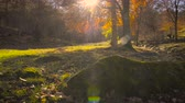 backlight : Country landscape in autumn Stock Footage