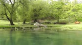 mystic : Mysterious Fairy Tale Pond and Spring handheld Stock Footage