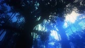 quiet : 4K Mysterious Fairy Tale Fantasy Deep Jungle at Night 3D Animation