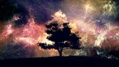 туманность : 4K Lonely Tree under Amazing Night Sky