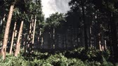 titokzatos : 4K Epic Evergreen Forest Cinematic 3D Animation 3