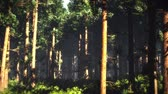 magický : 4K Epic Evergreen Forest Cinematic 3D Animation 5