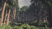 harmonious : 4K Epic Evergreen Forest Cinematic 3D Animation Flat 1