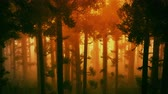 harmonious : 4K Wonderful Epic Evergreen Forest in the Sunset Aerial 3D Animation 2 Stock Footage