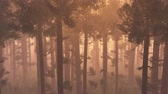 harmonious : 4K Wonderful Epic Evergreen Forest in the Sunset Aerial 3D Animation Flat 1