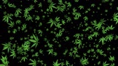 narkotik : 4K Cannabis Leaves Flying Transparent Background