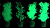 narkotik : Cannabis Plants in Abstract Lights Looping 3D Animation Stok Video
