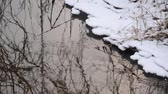 frieza : Reflection of a bare tree in a brook, Karower Seen Nature Reserve, Berlin, Germany Stock Footage