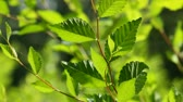 weather : Bright green leaves and trees in the summer.