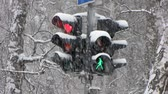 proibir : Traffic Light for pedestrian. Snowfall.