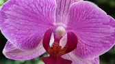 Close up of a pink orchid flower