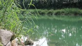 Pond in summer with green water Stok Video