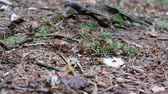 ants on the forest ground