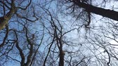 высокий : looking up to the trees, low angle