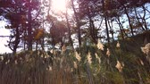 gerenda : sun beams shine through the trees, slow motion