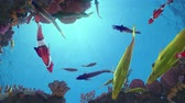Seamless loop of colorful fish swimming around a vibrant coral reef with sun rays in the back - high quality 3d animation