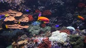 низким углом зрения : Underwater panorama, vivid colorful multicolor small and big tropical see fishes in aquarium with corals, algae weed and grass, close up, low angle view