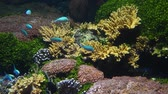Underwater panorama, vivid colorful multicolor small and big tropical see fishes in aquarium with corals, algae weed and grass, close up, low angle view