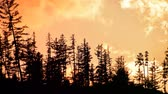 desastre : Cinemagraph of clouds running in orange sunset sky with spruce and pine trees silhouettes