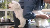 Cutting the rear leg paw of adorable white dog. The dog is standing on the grooming table and camera is in the motion. Stock Footage