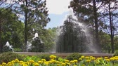 coniferous trees : Fountains spray water with yellow flowers in summer, shot at ground level.  Stock Footage