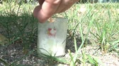 порошкообразный : Glass jar is blown up after small bomb is lit with match in sunlight with white powder spreading about during explosion.