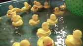 fairgrounds : Large yellow toy ducks float in a pool at the fair before game resumes, and then camera pans up to lighted ferris wheel at end.