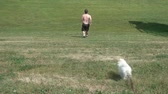 perseguição : Man exercising by running up and down a hill with his dog in the brightly illuminating sunshine.