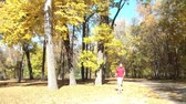 caqui : Autumn clip of man walking small white dog in wooded park with bright yellow tree in background dropping leaves in the sunlight.