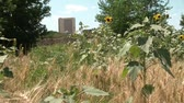 proximidade : Still shot of wild sunflowers and wheat in foreground representing rural, with high-rise building in background representing urban.
