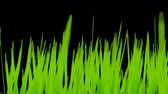 clorofila : Grass Growing Background w Alpha (30fps). Artificial and stylized blades of grass growing upwards in frame with an alpha channel for laying over a background of your choice.