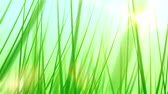 clorofila : Moving Through Grass Background (24fps). Pushing forward through some artificial and stylized blades of grass against a soft blue sky background with a lens flare coming from the sun.