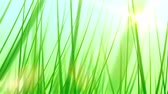 clorofila : Moving Through Grass Background (25fps). Pushing forward through some artificial and stylized blades of grass against a soft blue sky background with a lens flare coming from the sun.
